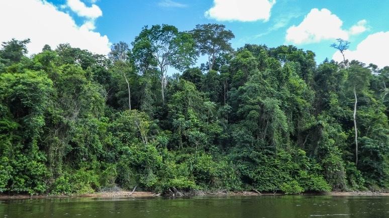 Astounding Benefits: COVID-19 Response Improves Suriname's Health System
